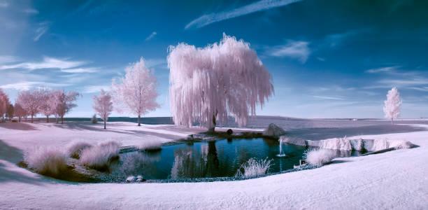 infrarot-szene von einem teich und bäumen an einem schönen sonnigen tag - landscape crazy stock-fotos und bilder