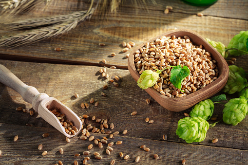 istock Ingredients for fresh beer laying on wooden plank. 848066540