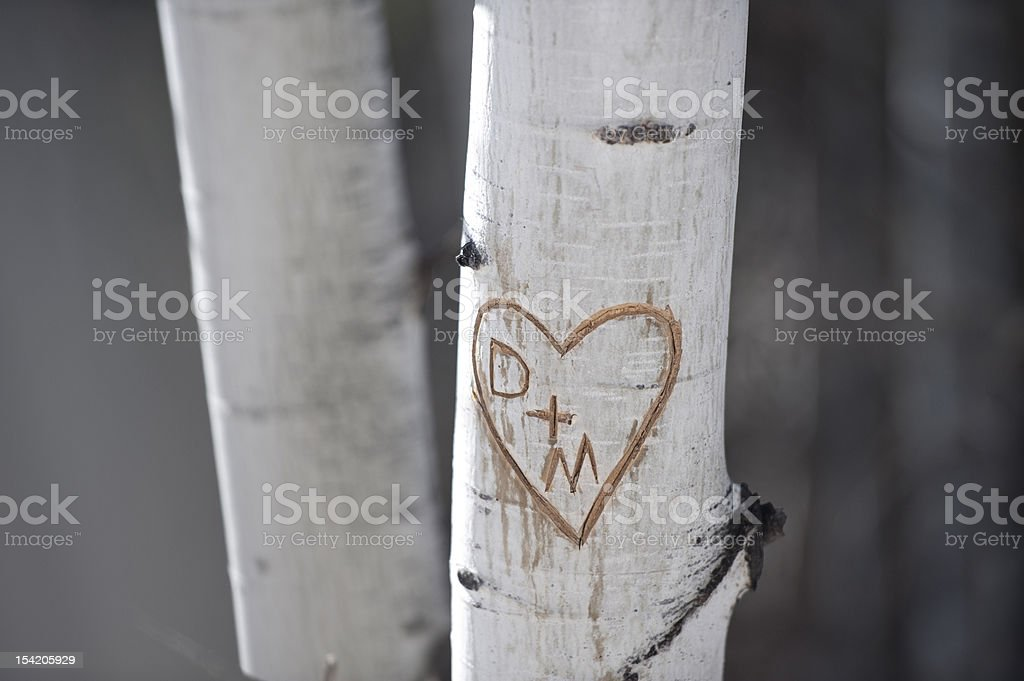 initials and heart carved into tree stock photo