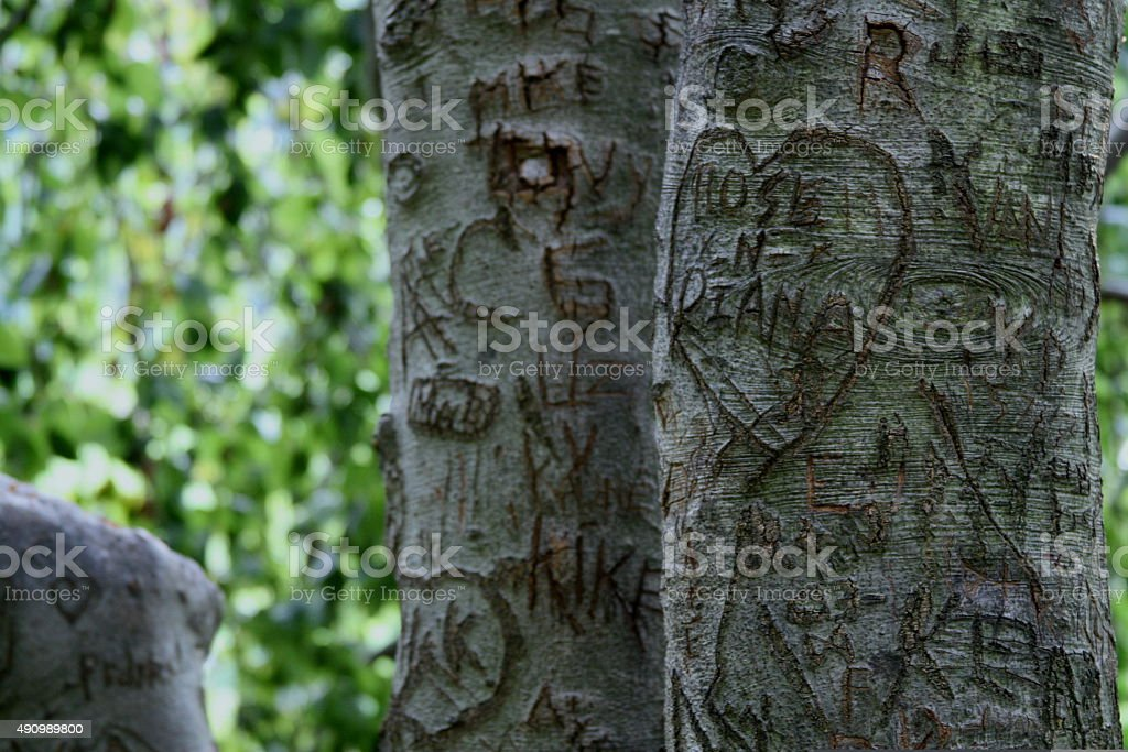 Initials And Names Carved Into Tree Stock Photo More Pictures Of