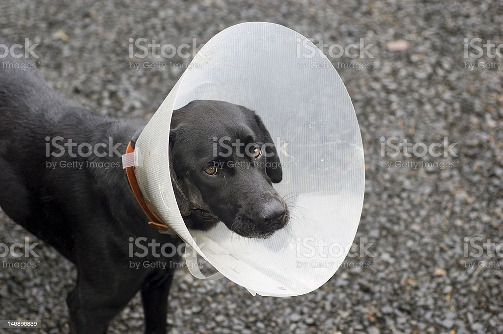 Injured Dog stock photo