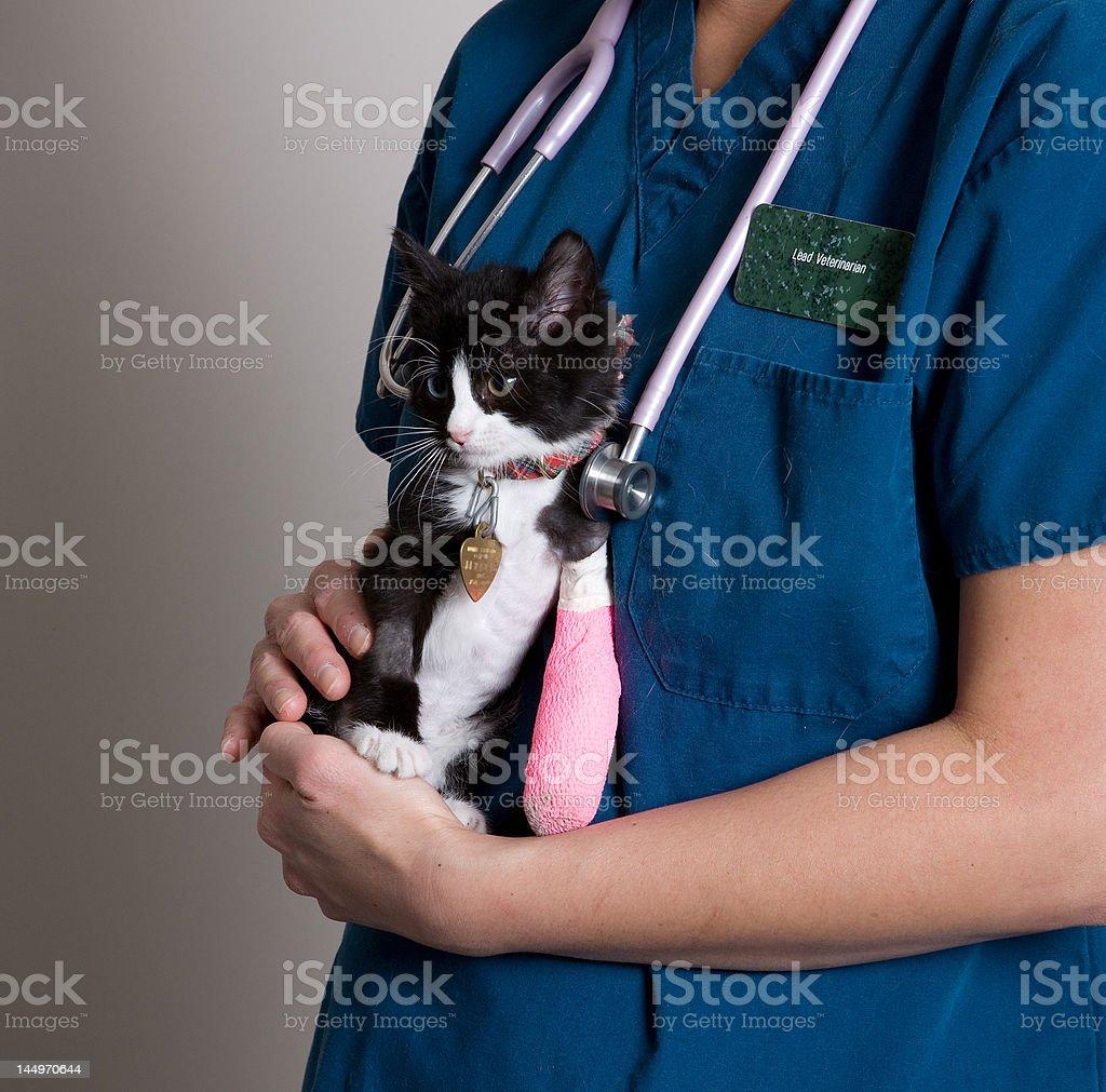 injured kitten stock photo