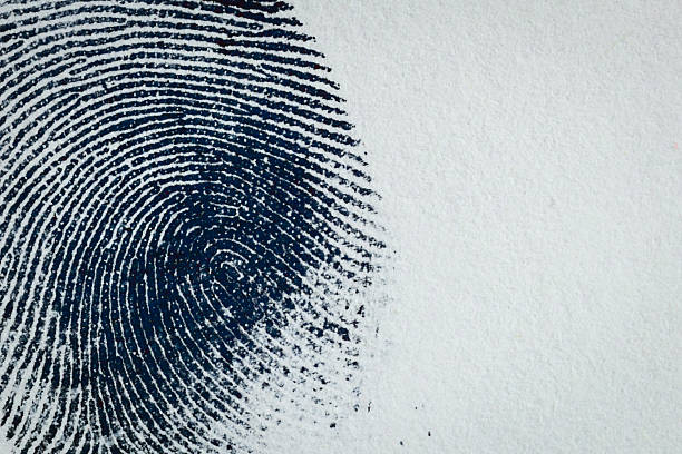 Ink Fingerprint on paper 05 Thumbprint on paper. Macro. crime stock pictures, royalty-free photos & images