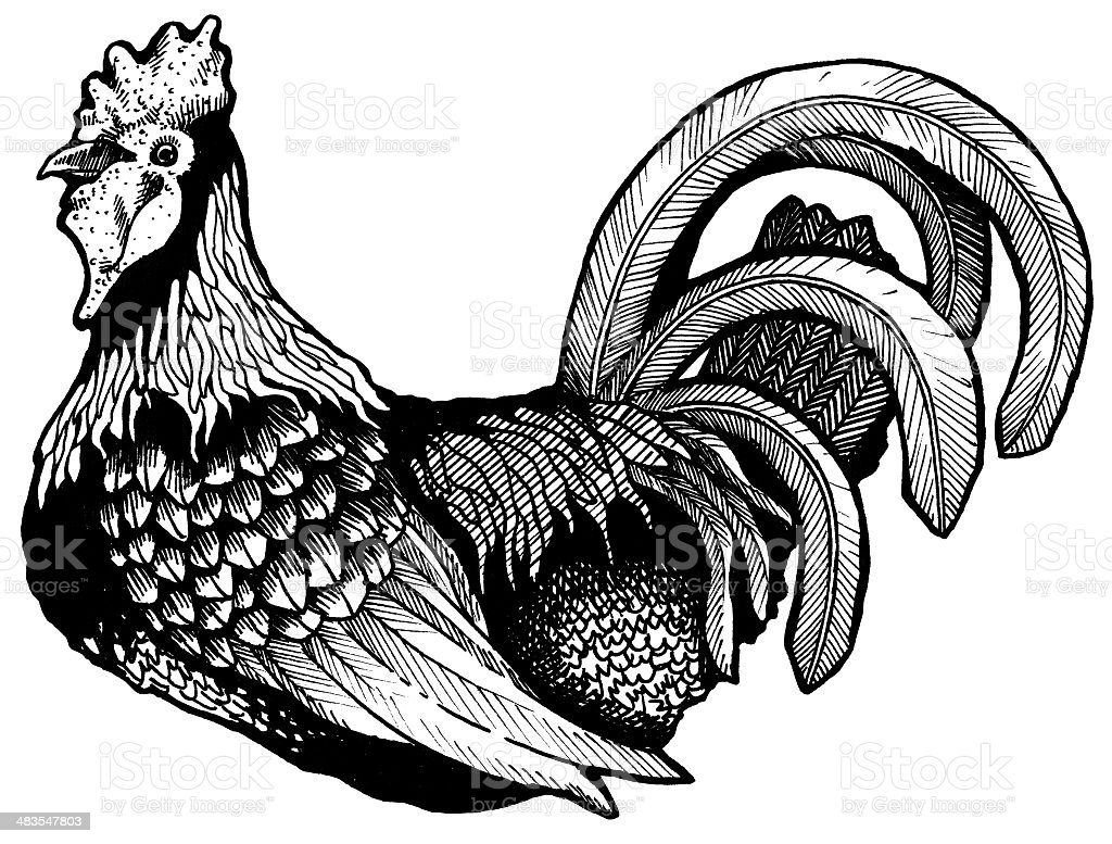 Ink Rooster Illustration royalty-free stock photo