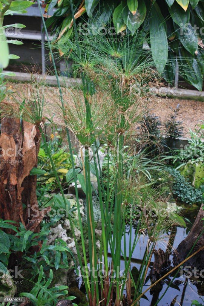 Cour intérieure - Plan d'eau - Végétation verdoyante photo libre de droits