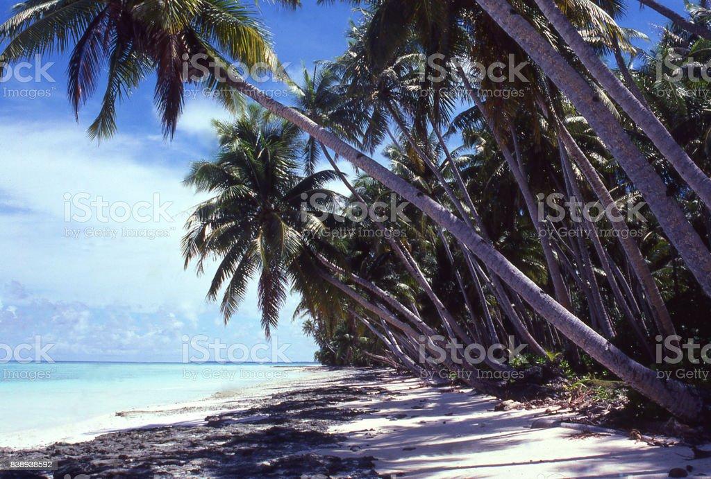Inner lagoon beach and coconut palms on an atoll near Majuro Marshall Islands Asia Pacific stock photo