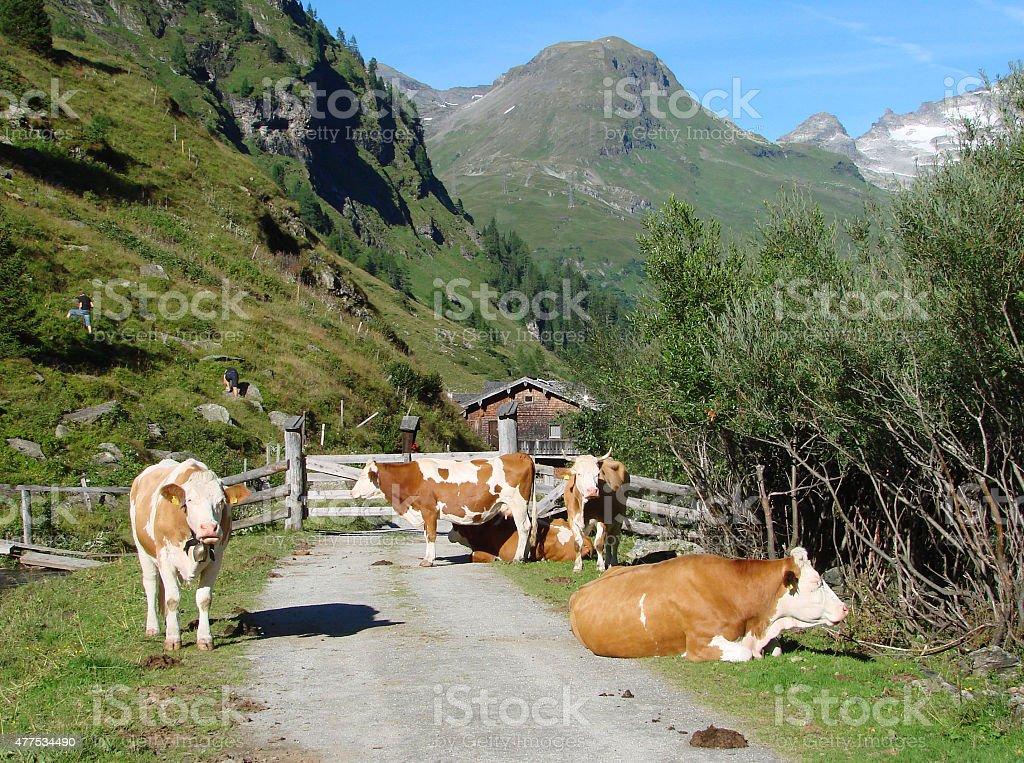 Innergschloess - Austria stock photo