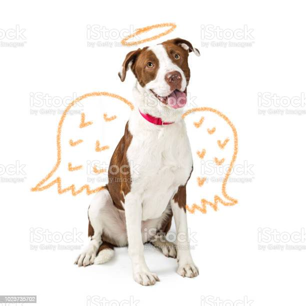 Innocent dog with drawn angel wings picture id1023735702?b=1&k=6&m=1023735702&s=612x612&h=gdhthtmzrwjln16dzyfbchyx4bkt o 86f njb390hs=
