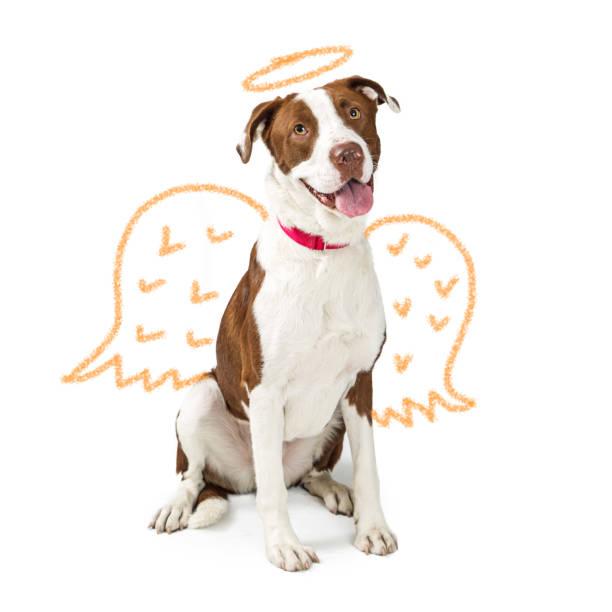 Innocent dog with drawn angel wings picture id1023735702?b=1&k=6&m=1023735702&s=612x612&w=0&h=tikzehsa9c1x1aguwixmapuxxrq qdcbyxkrx6zfp k=