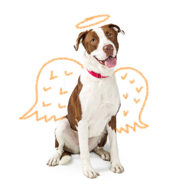 unschuldigen hund mit gezeichneten engelsflügel - engel zeichnen stock-fotos und bilder
