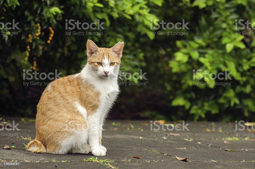 Innocent little kitten royalty-free stock photo