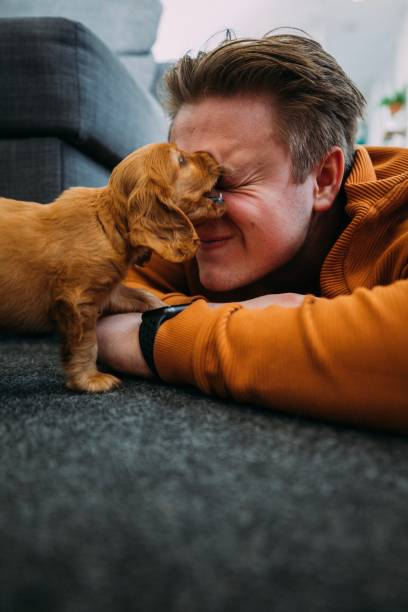 Innocent Puppy Attacks stock photo