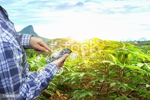 510149992 istock photo Innovation technology for smart farm system, Agriculture management, Hand holding smartphone with smart technology concept. 1165990721