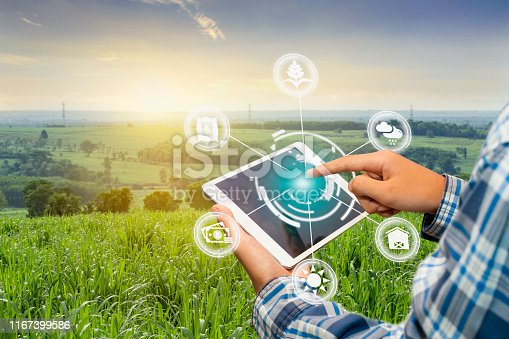 istock Innovation technology for smart farm system, Agriculture management, 1167399586