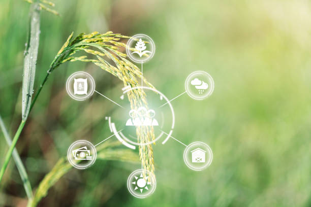 Innovation technology for smart farm system, Agriculture management, Hand holding smartphone with smart technology concept. stock photo