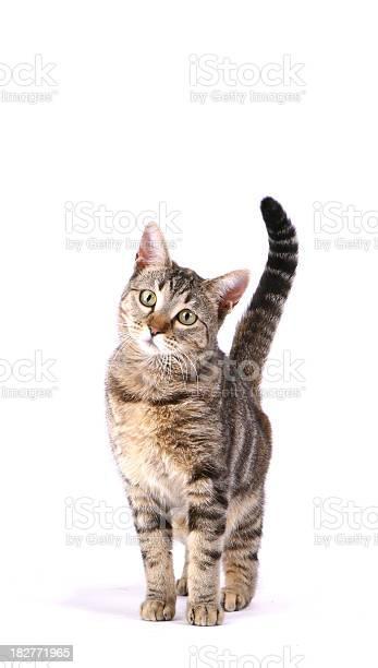 Inquisitive cat picture id182771965?b=1&k=6&m=182771965&s=612x612&h=h7oeu4h8xb5 4upb3muiti5i8yysbzlyqgqyzr2qeoy=