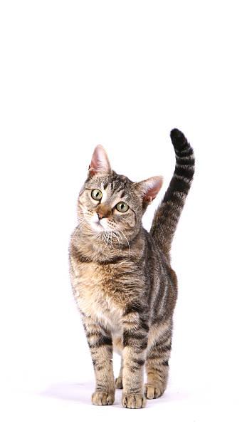 Inquisitive cat picture id182771965?b=1&k=6&m=182771965&s=612x612&w=0&h=yt8y0b6rhuwklymji4pbgd4vhlibuv3meokxzjns7oe=