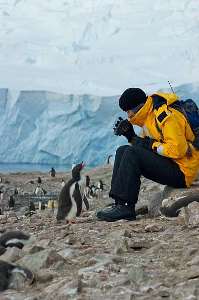 Inquisitive Penguin stock photo