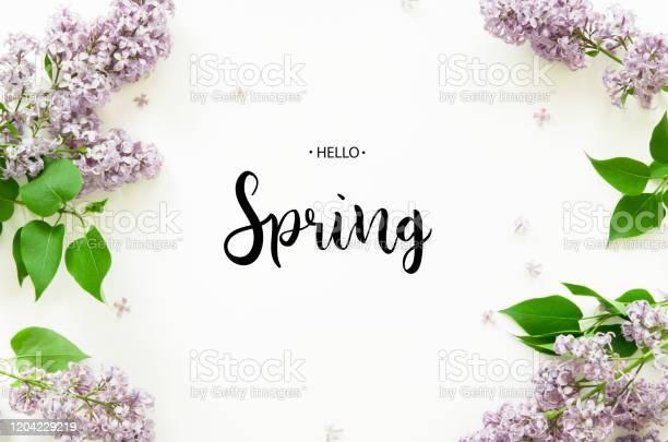 Photo of Inscription Hello Spring. Lilac flowers on white background. Spring flowers. Top view, flat lay. - Image