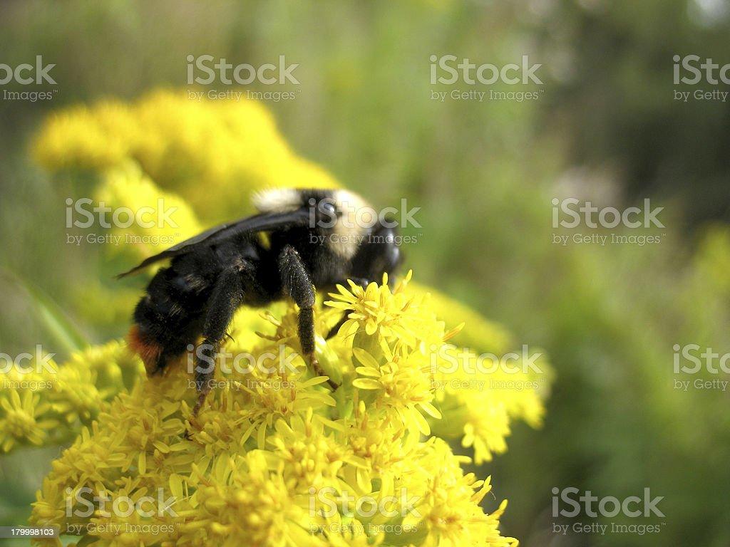 곤충 및 꽃 royalty-free 스톡 사진