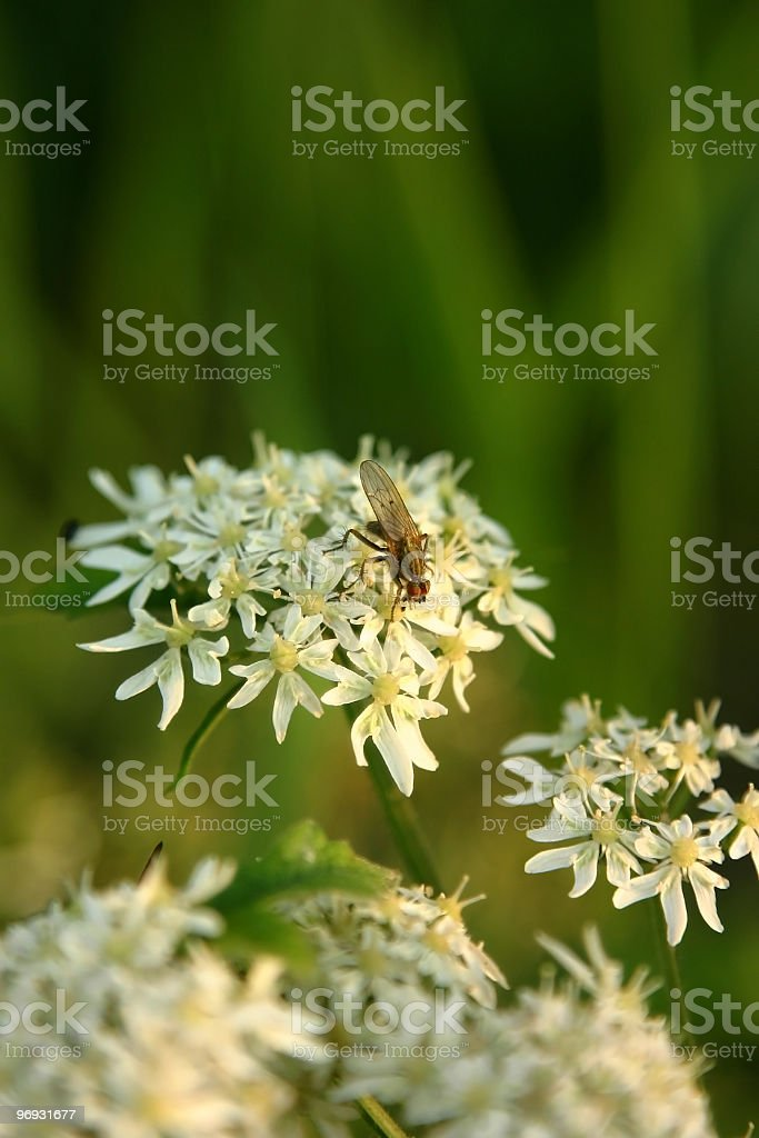 Insect and flower royalty-free stock photo