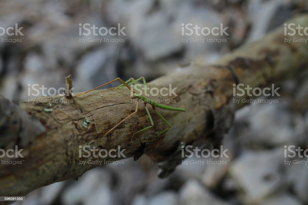 insect attack stock photo