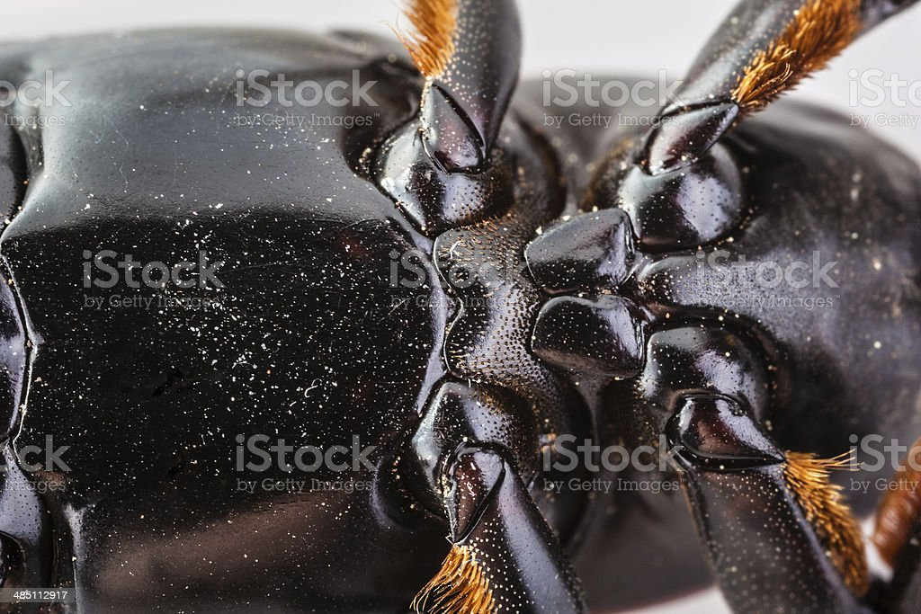 Insect belly royalty-free stock photo
