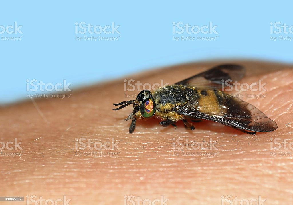 insect bite stock photo