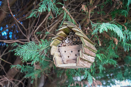 Insect box hanging in a fur tree