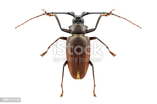 istock Insect bug isolated 696254406