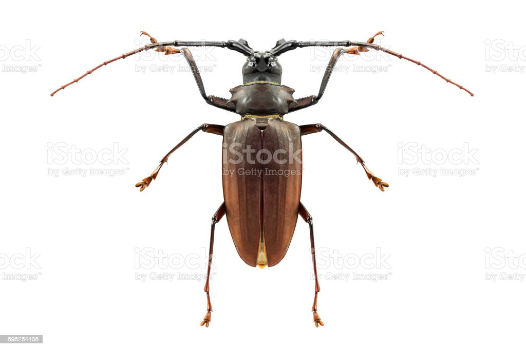 Insect bug isolated stock photo
