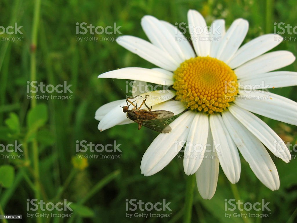 Insect caught in a web royalty-free stock photo