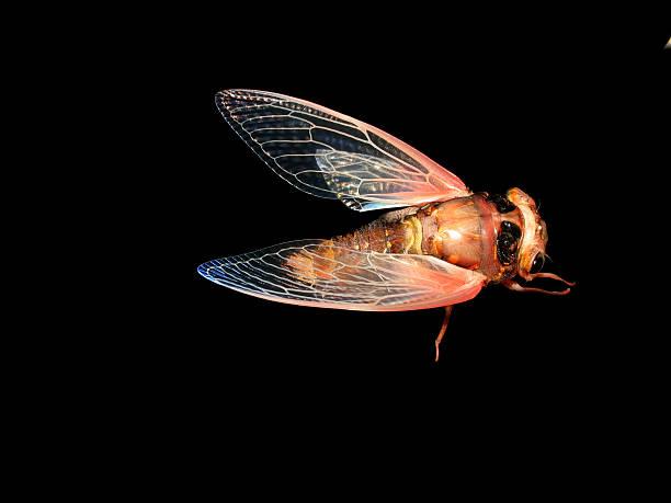 insect cicada eclosion - locust swarm stockfoto's en -beelden
