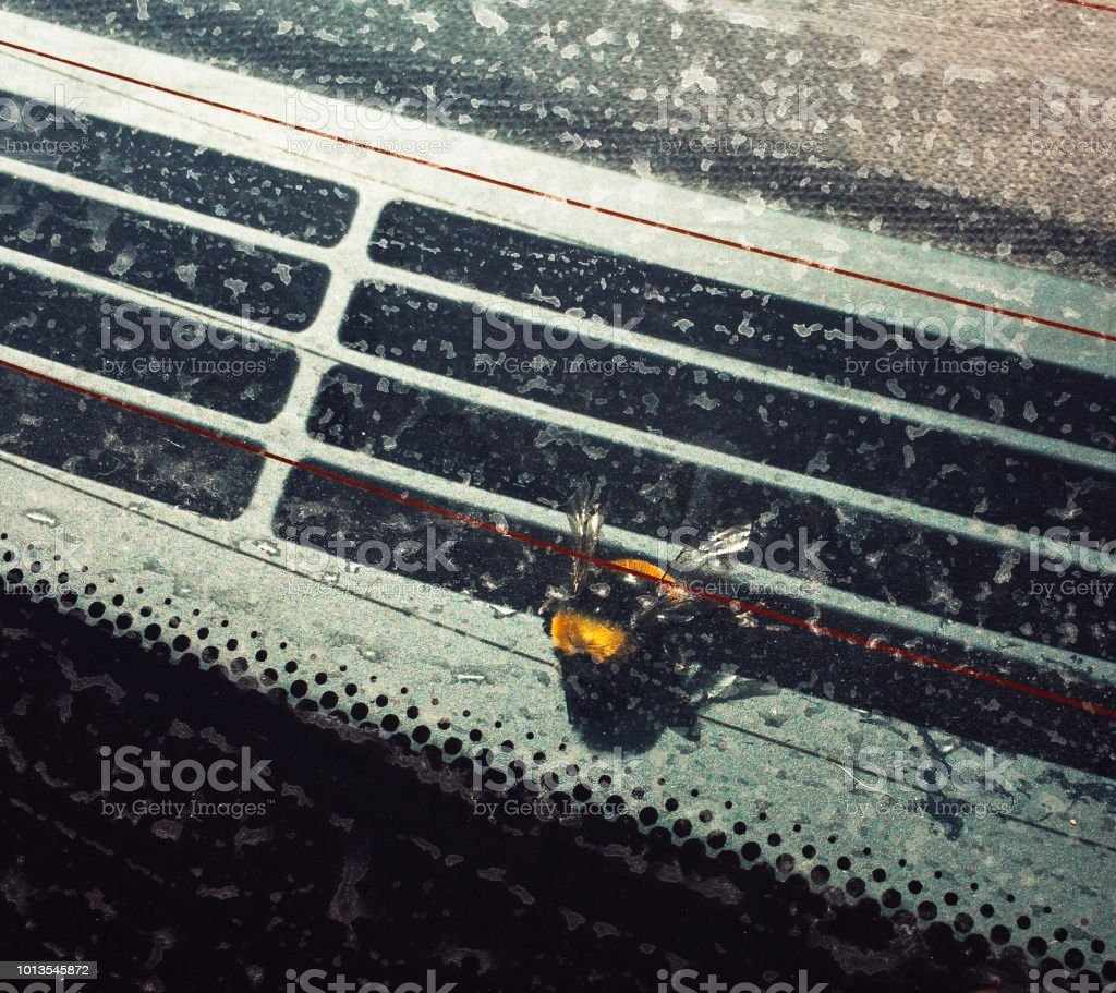 insect dies in a car accident - foto stock