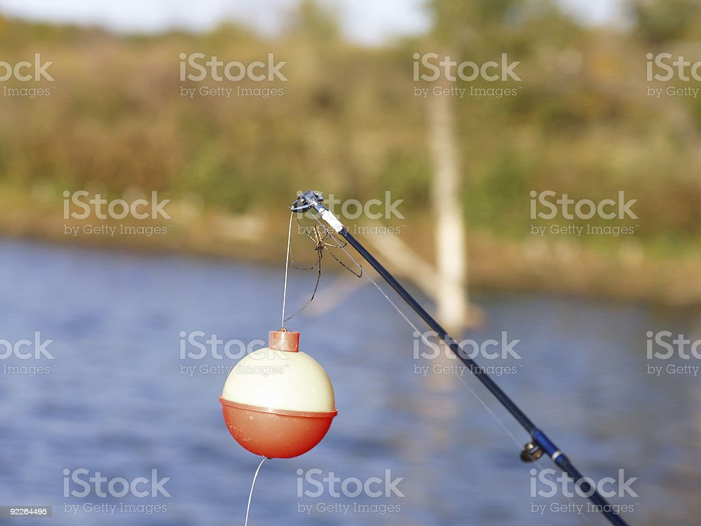 Insect - Fishing Spider stock photo