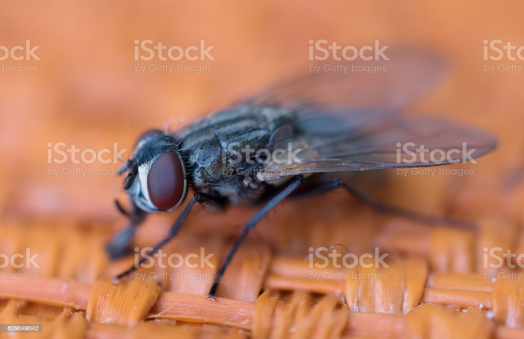 insect fly stock photo