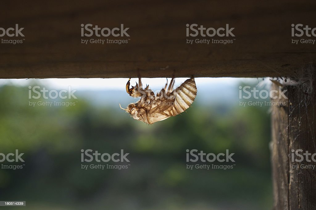Insect flying trasparent royalty-free stock photo