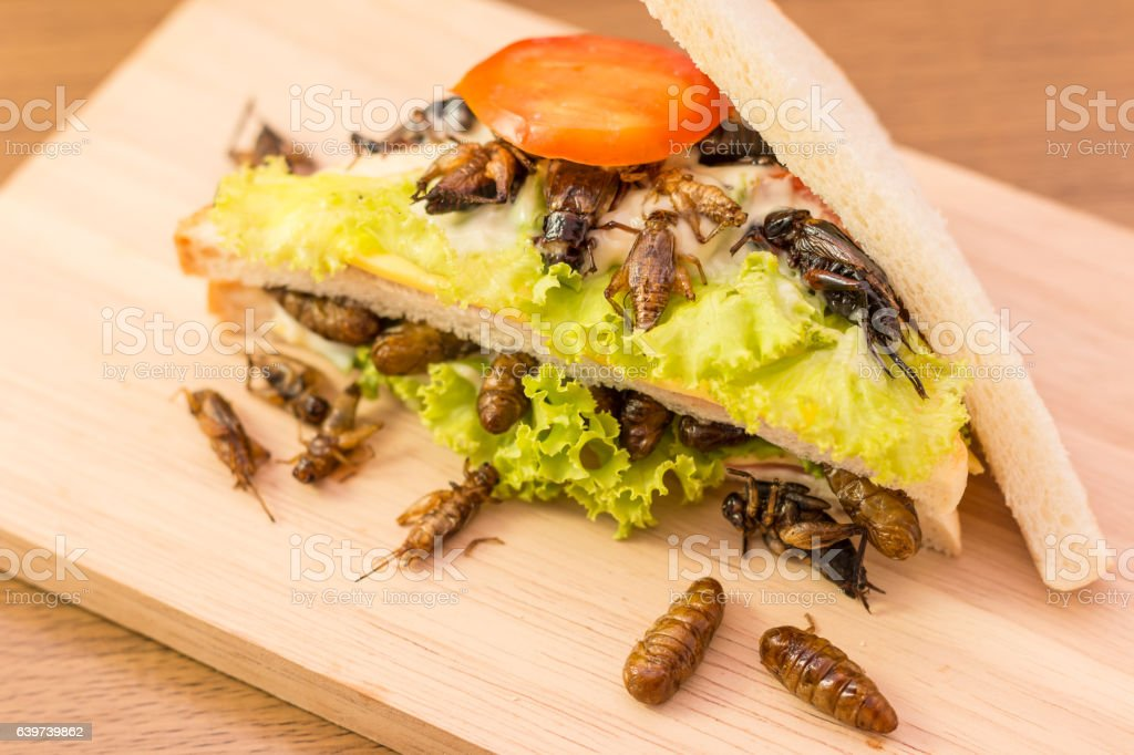 Insect food stock photo