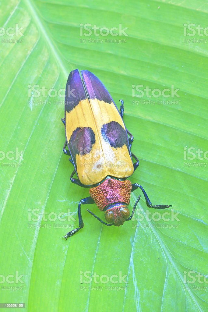 insect from Thailand stock photo