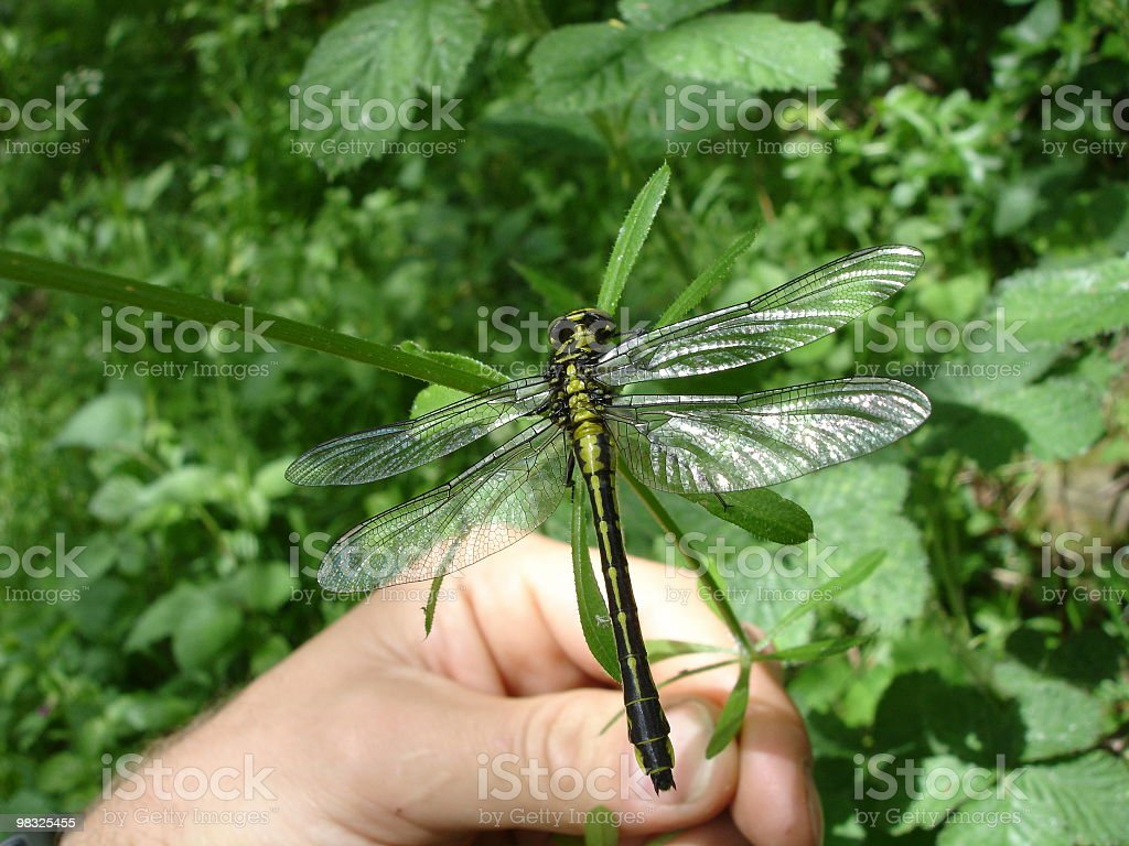 insect hand royalty-free stock photo