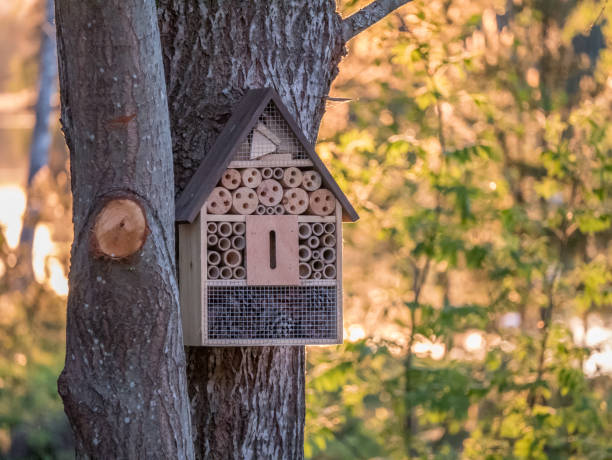 Insect hotel for bugs to provide shelter on tree. Nature sunset in background. stock photo