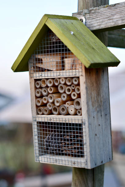 Insect hotel in a Garden stock photo