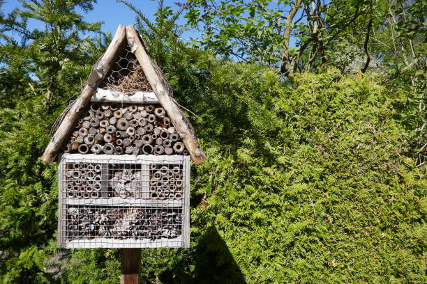 insect hotel, insect refuge  in the garden in front of a green hedge - wildlife conservation stock photos and pictures