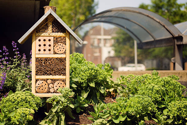 insektenhotel oder im haus im einer stadt, die umgebung - urbaner garten stock-fotos und bilder