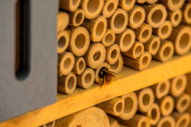insect hotel with European orchid bee stock photo