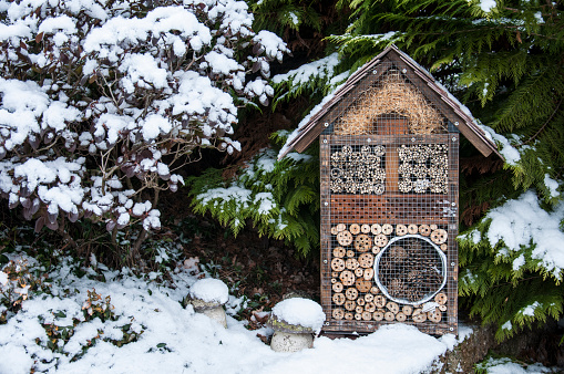insect house in the forest