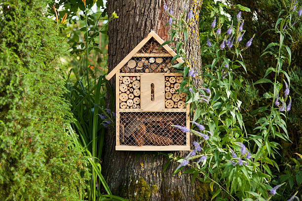 insect house - insect stock pictures, royalty-free photos & images