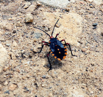 Insect in a dirt trail