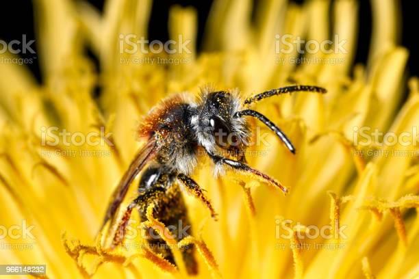 Insetto In Un Fiore - Fotografie stock e altre immagini di Ambiente