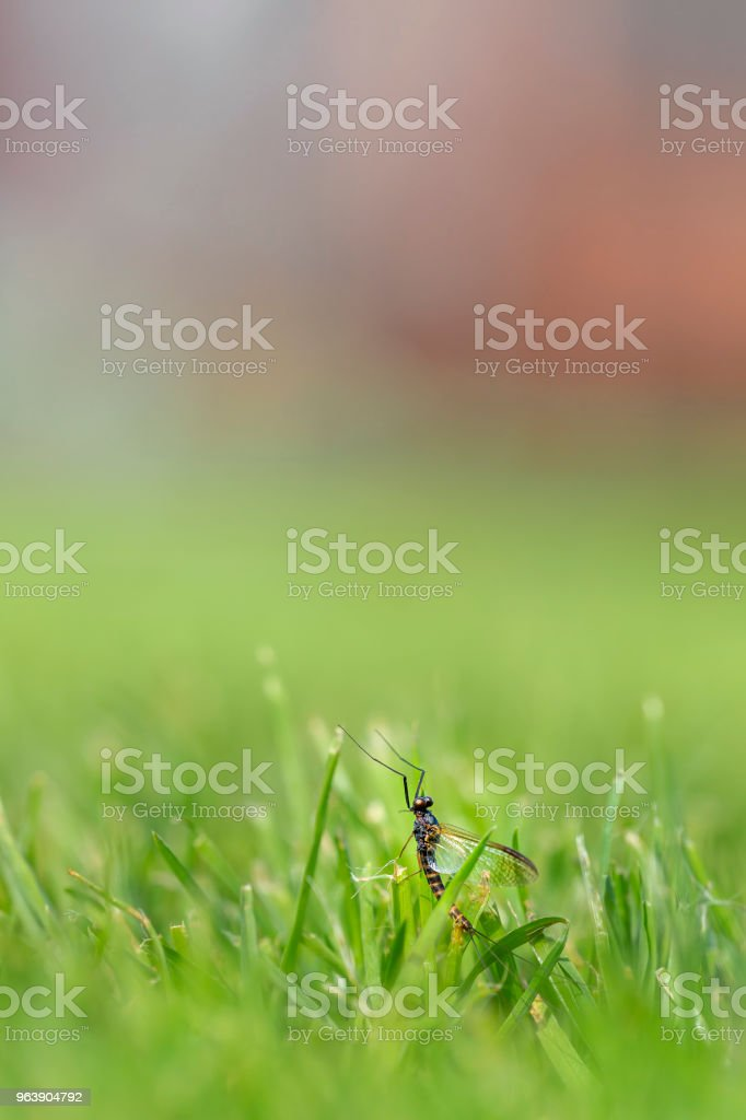 Insect in grass - Royalty-free Animal Stock Photo